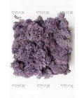 Ягель пурпур (фиолетовый) - Фото1