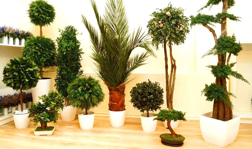 Стабилизированные деревья в помещениях
