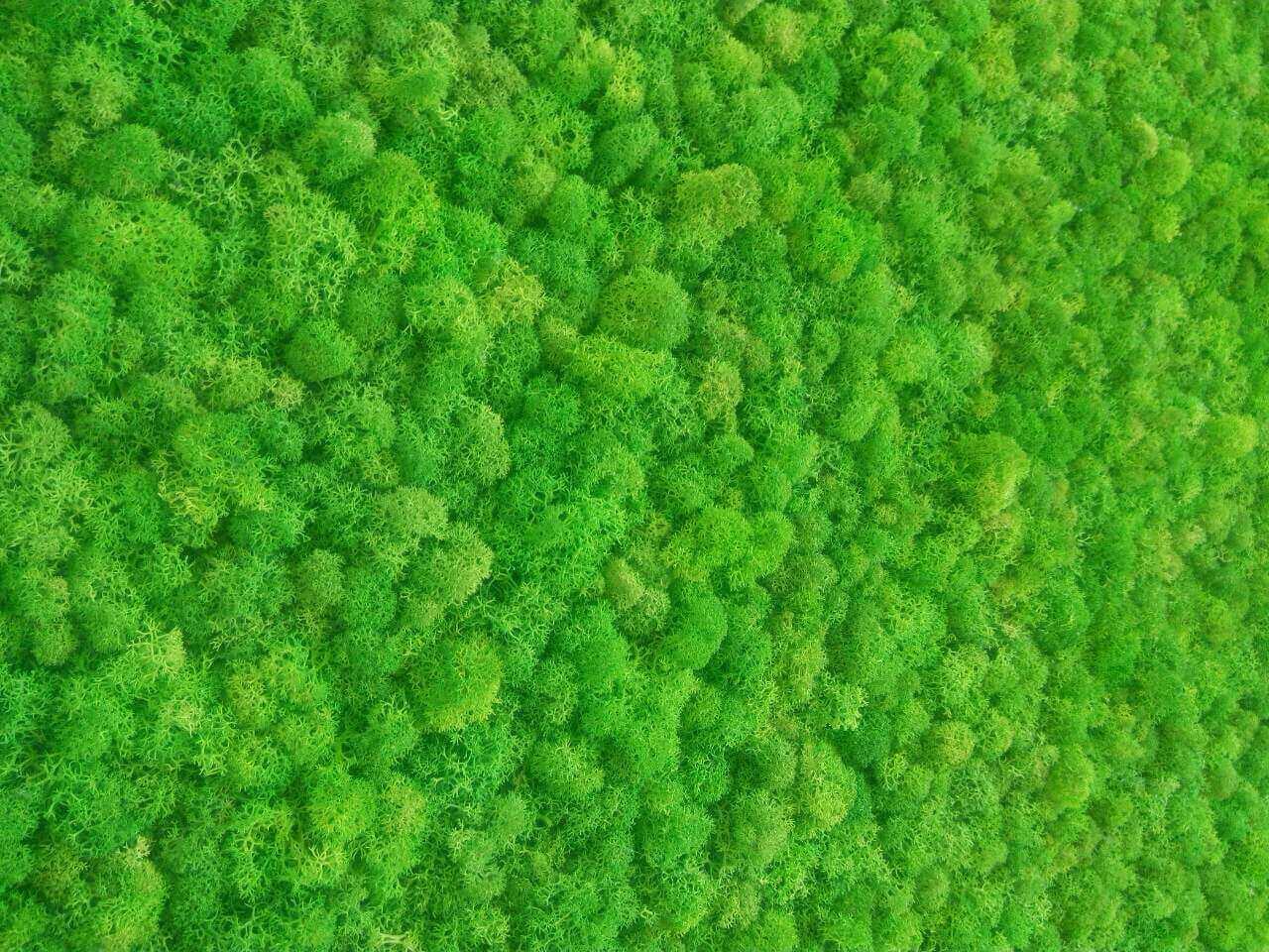 Вертикальное озеленение: панно из стабилизированного мха в ванной комнате