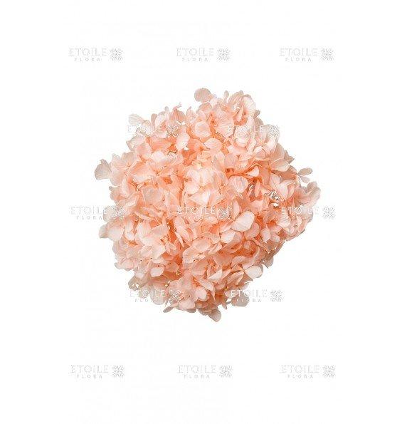 Гортензия премиум светло розовый