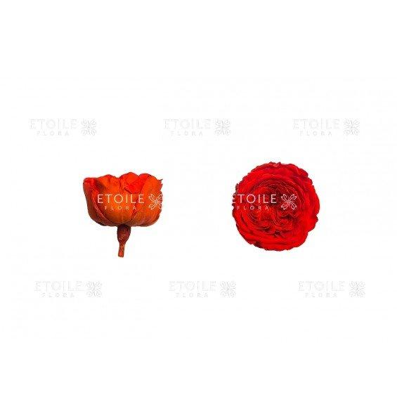 Листья эвкалипта и гардения в вазе