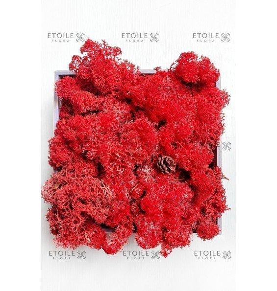 Ягель красный