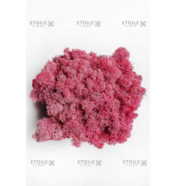 Ягель яркий розовый