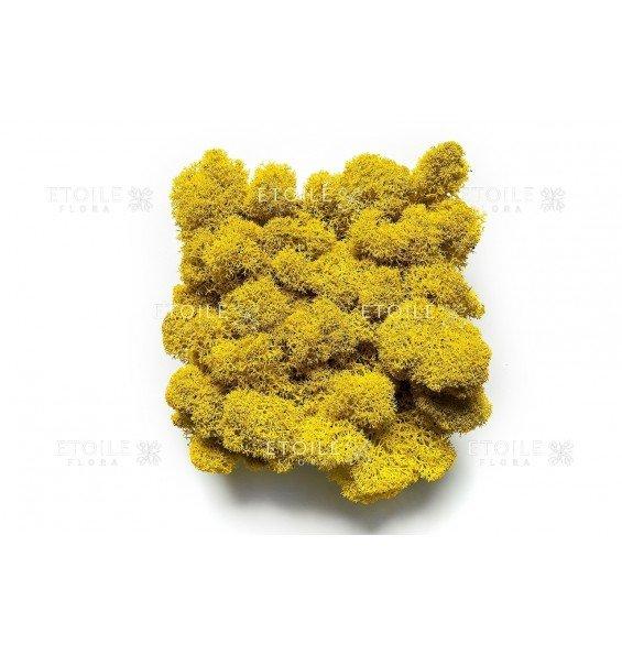Ягель желтый