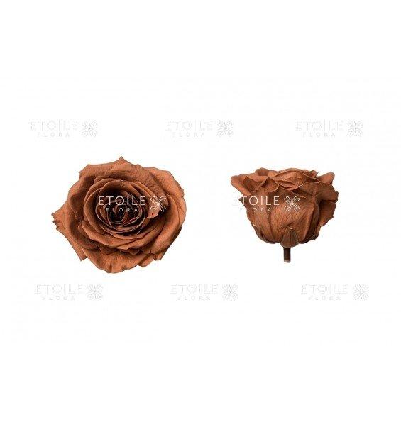 Роза премиум оранжевый