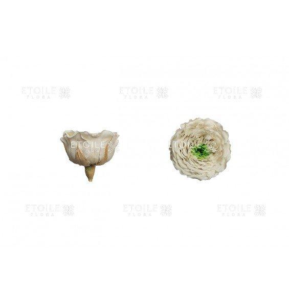 Роза Амелия кремово-салтовый