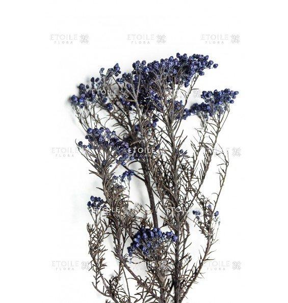Диосми синий