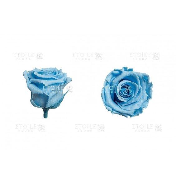 Роза стандарт голубая