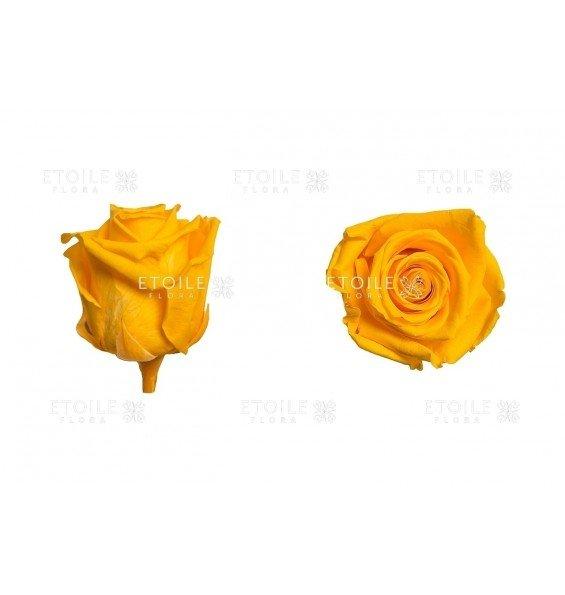 Роза стандарт ярко-желтая