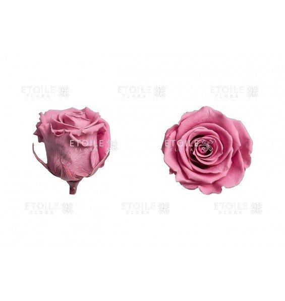 Роза стандарт цветок вишни