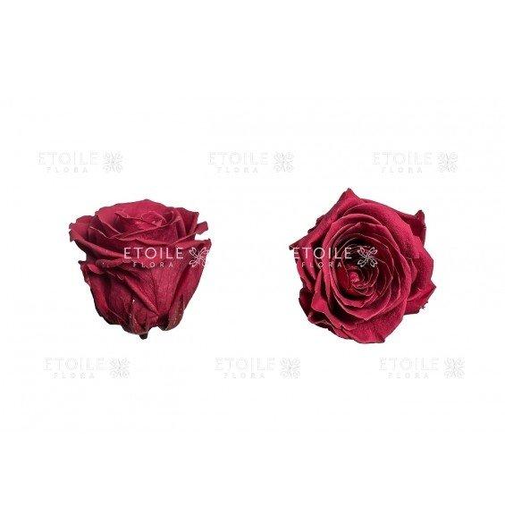 Роза премиум кренбери