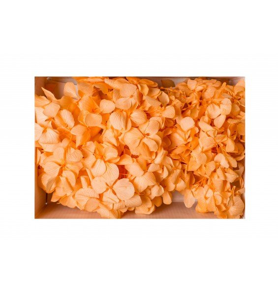 Гортензия нарезка оранж