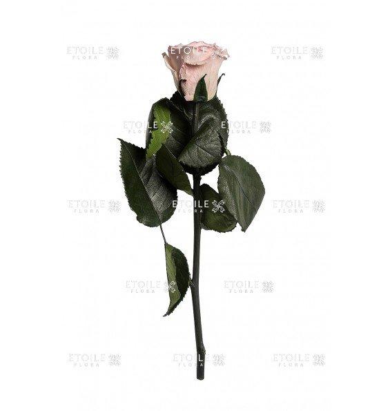 Роза в коробке на стебле бледно розовая