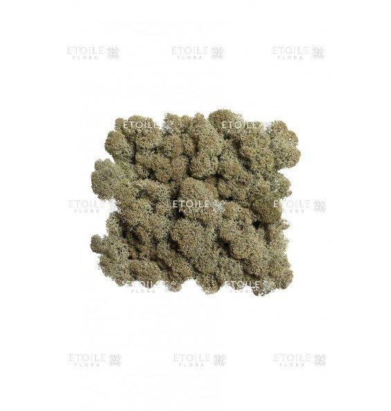 Ягель серо-зеленый