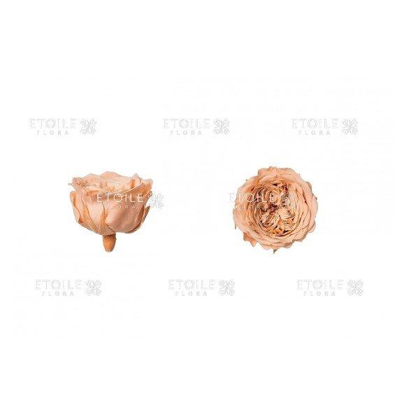 Роза Амелия персиковая