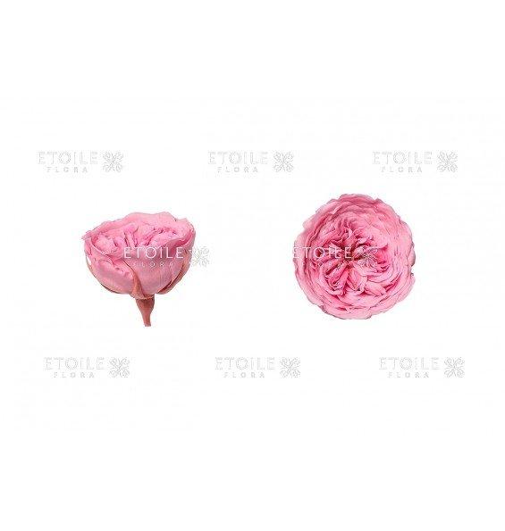 Роза Амелия светло-розовая