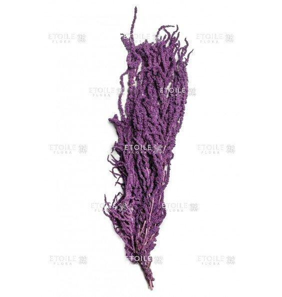 Амарант фиолетовый