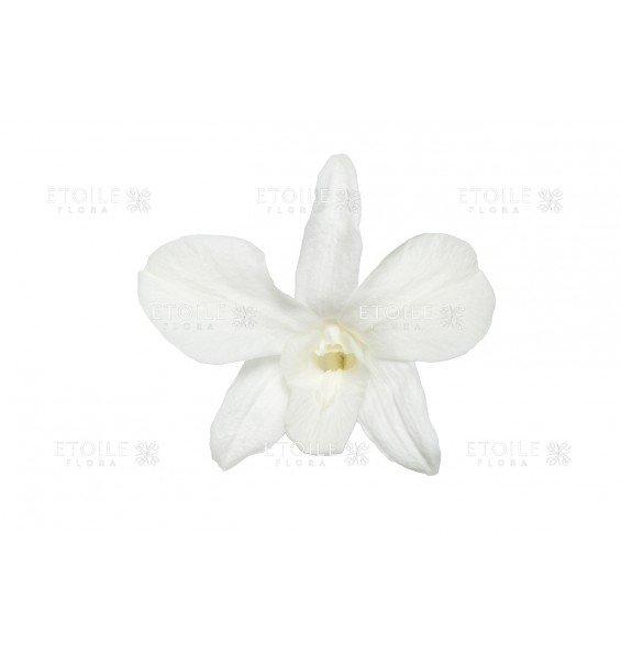 Орхидея Дендробиум белая