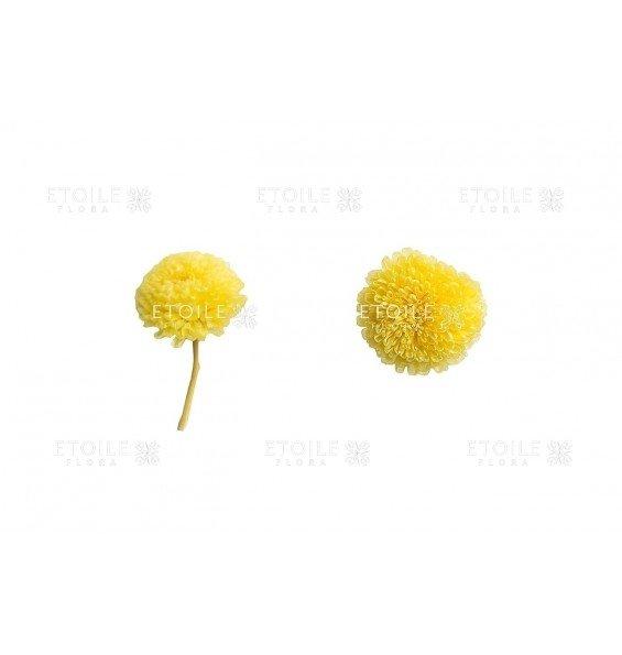 Хризантема фокус желтая