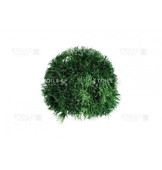 Гвоздика зеленая