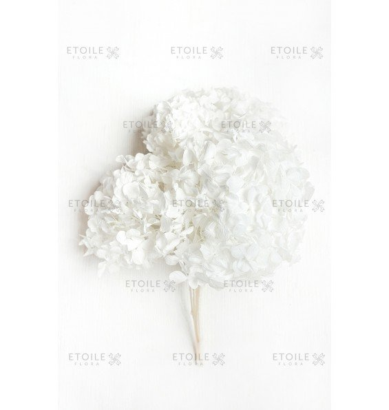 Гортензия премиум белая
