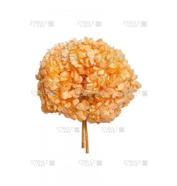 Гортензия премиум оранжевая