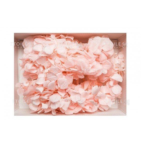 Гортензия нарезка розовая