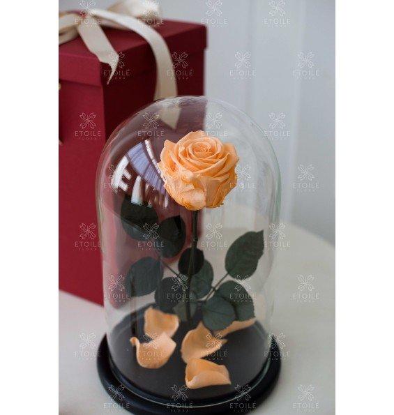 """Роза в колбе """"Персиковый сад"""""""