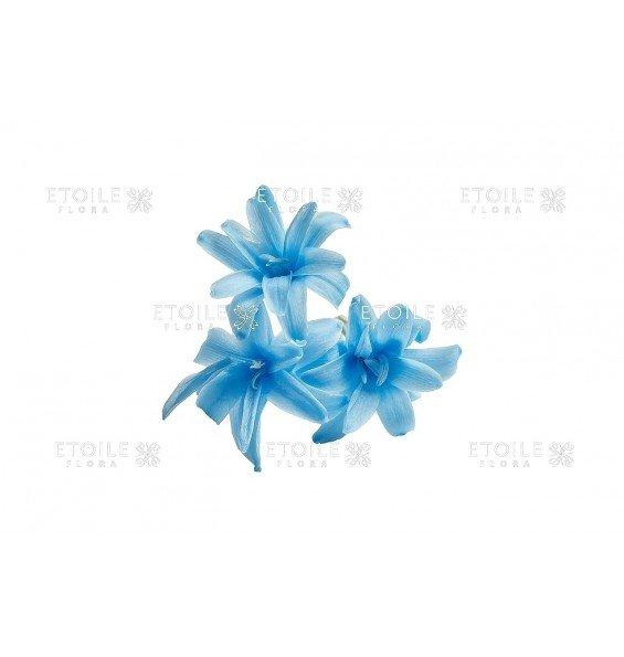 Тубероза голубая