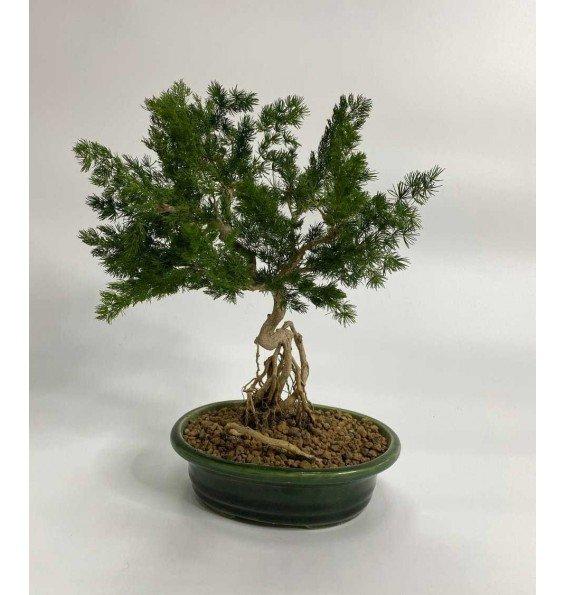 Пушистое дерево
