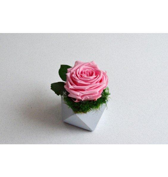 Роза в бетонном кашпо