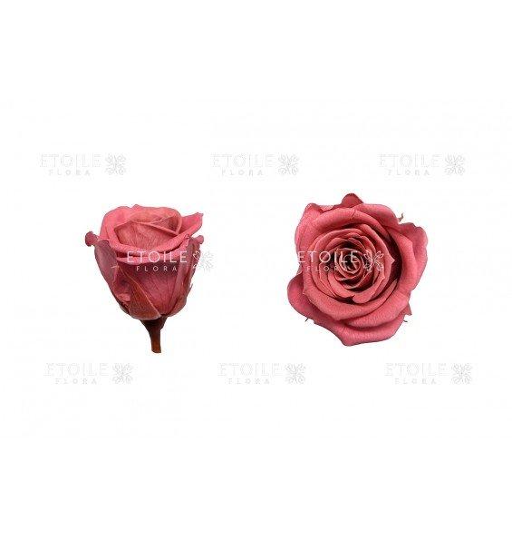 Роза мини крэнбери