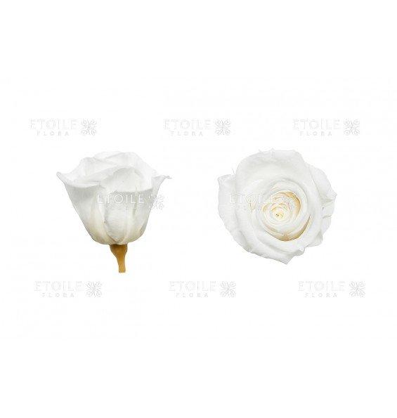 Роза мини белая