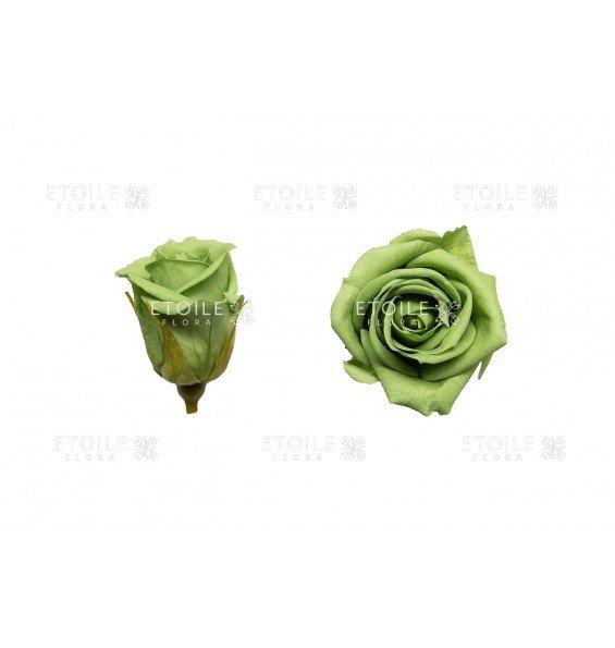 Роза мини зеленый чай