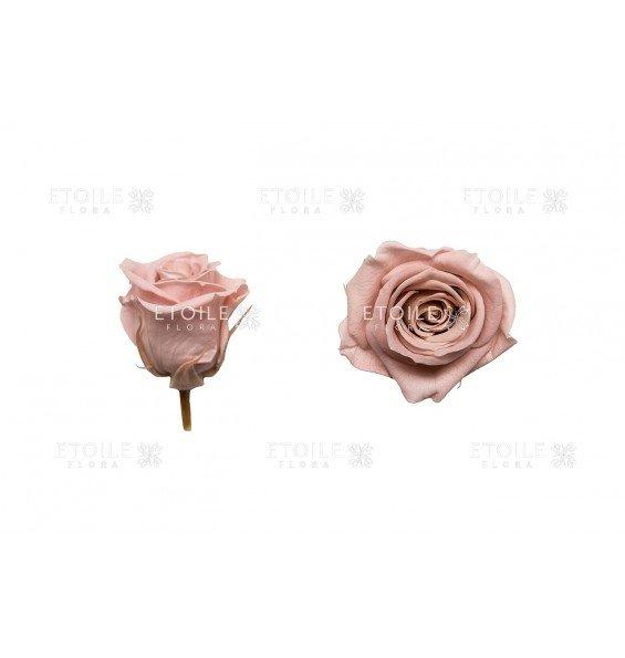 Роза мини грязно розовый