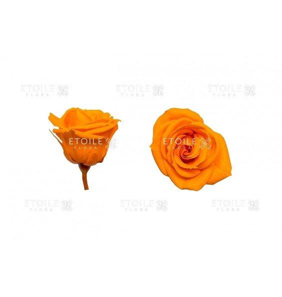 Роза мини оранжевая