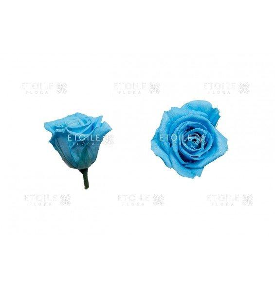 Роза мини голубая