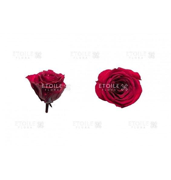 Роза принцесс бордовая