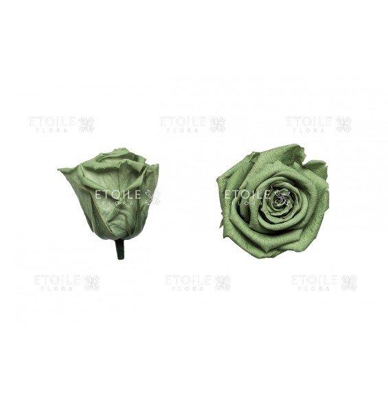 Роза стандарт зеленый чай