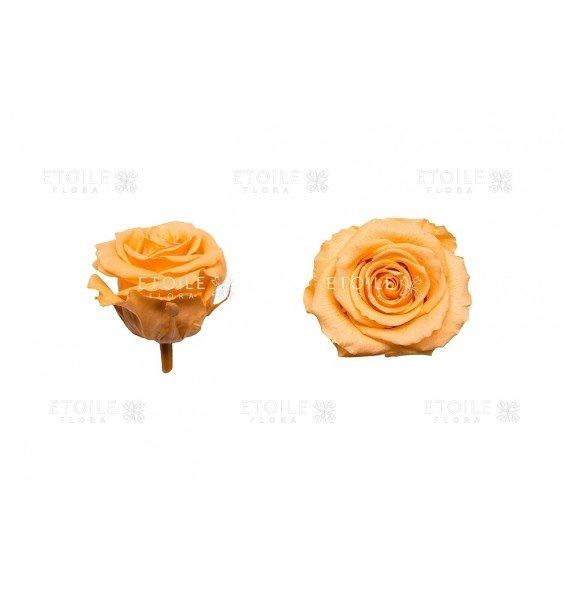 Роза стандарт персиковая