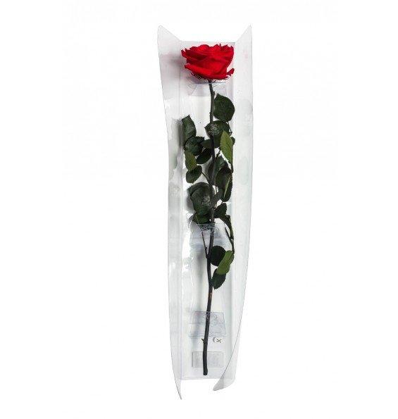 Роза на стебле премиум в коробке красная