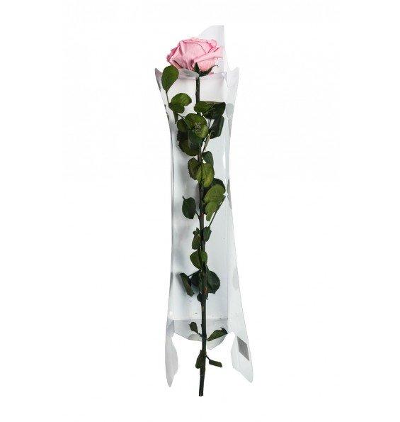 Роза на стебле премиум в коробке розовая