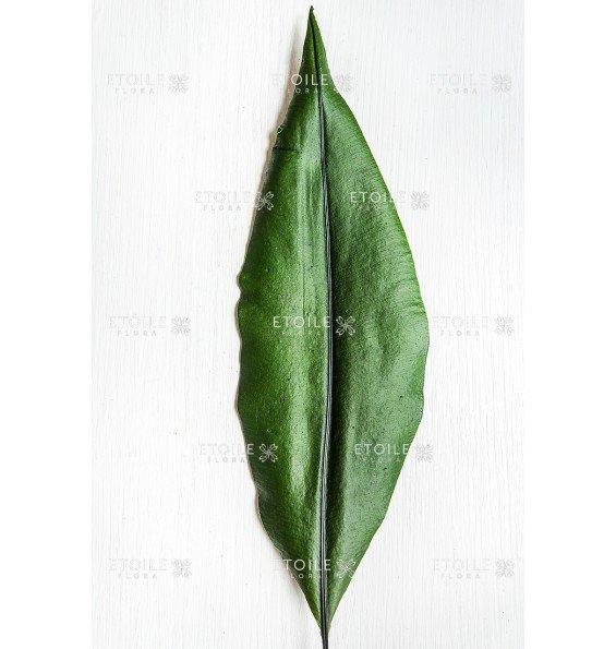 Тропический лист