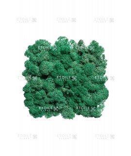 Ягель пасифик (лазурный зеленый)