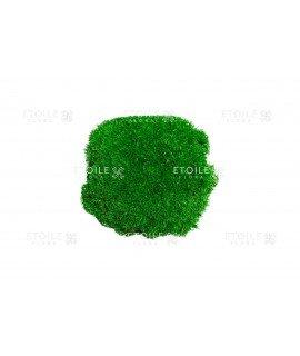 Мох кочка светло зеленый