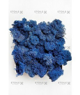 Ягель синий