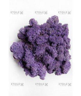 Ягель пурпур (фиолетовый)