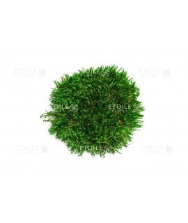 Кочковый мох Прованс