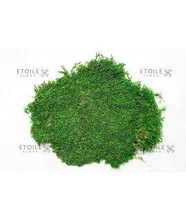 Плоский мох насыщенный зеленый