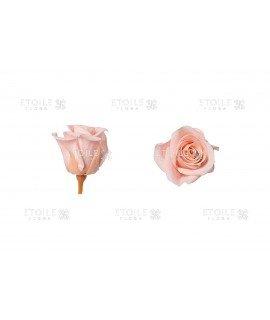 Роза мини винтажно розовый
